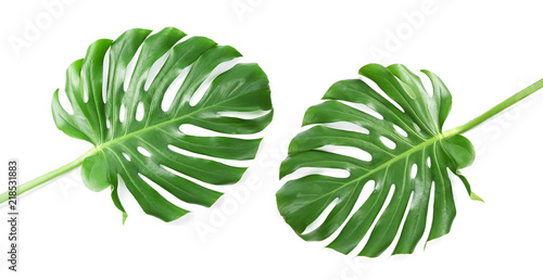 Poster Vegetal Set with tropical Monstera leaves on white background