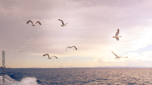Seagulls flying over the sea in soft light.