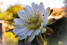 Wild Desert Flowers And Garden Flowers From All Over The USA.