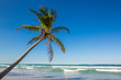 the palm tree hangs over the Atlantic Ocean on Macao beach in Dominican Republic