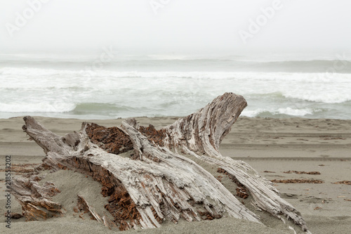 Fotografie, Obraz  Driftwood on a beach in the pacific ocean
