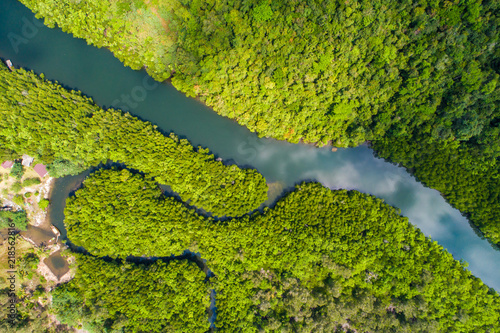 River in tropical mangrove green tree forest Canvas Print