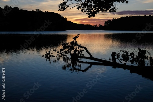 Αφίσα  Scenic image of the silhouette of a great blue heron perched on a branch of a do