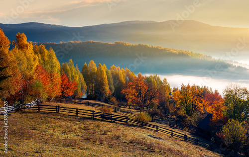 Fototapeta rural field and orchard in autumn at sunrise. mountainous countryside with fog in distant wally obraz