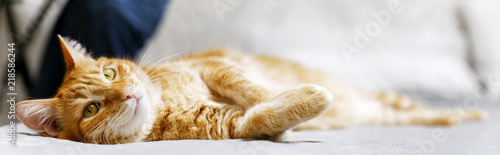 Closeup portrait of ginger cat lying on a bed stretching his paws and looking thoughtfully aside. Shallow focus and blurred background. Copyspace.