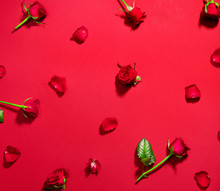 Beautiful Red Roses On Red Background. Holiday Rose Flowers With Leaves And Petals Flatlay. Love, St. Valentine's Day Background