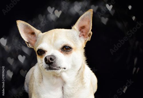 Photographie  un amour de chien