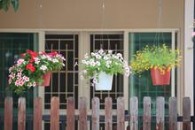 Hanging Flower Garden,Flowers In A Hanging Pot