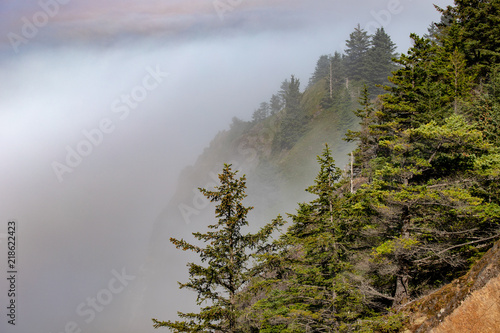 Photo  View of Stitka Spruce Clinging to the Cliffs along the Pacific Ocean in Coastal