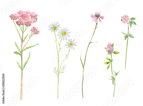 Photo  collection of medicine herbal. watercolor painting