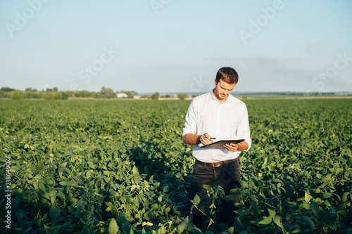Fototapeta Agronomist holds tablet touch pad computer in the soy field and examining crops before harvesting. Agribusiness concept. agricultural engineer standing in a soy field with a tablet in summer. obraz