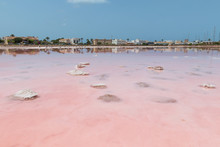 Broad Pink Colored Saline In F...