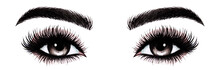 Woman Eyes With Long Eyelashes. Hand Drawn Watercolor Illustration. Eyelashes And Eyebrows. Сoncept Of Eyelash Extensions, Microblading, Mascara,  Beauty Salon. Black Eyes.