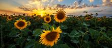 Summer Landscape: Beauty Sunse...