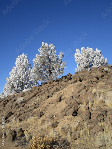 Fotografie, Obraz  Stunning juniper trees with a fresh coat of frost on a beautiful winter day in Central Oregon