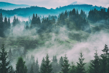 Fototapeta Carpathian mountain valley after the rain