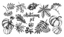 Ink Hand Drawn Set Of Autumn Leaves, Rowan Berries, Ripe Pumpkins, Acorns. Autumn Elements Collection With Brush Calligraphy Style Lettering. Vector Illustration.