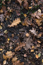 Autumn Leaves On Wet Earth Background From Above