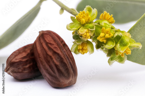 Jojoba seeds and flowers (Simmondsia chinensis) Tablou Canvas