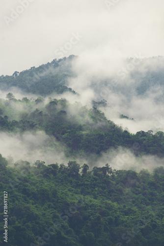 warstwy-lasu-tropikalnego