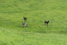 Three Donkeys In A Field