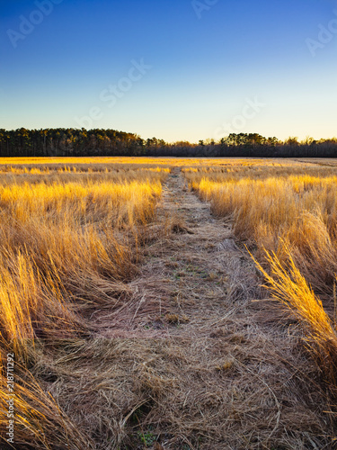 A path cuts through a field of native southern grass at sunset