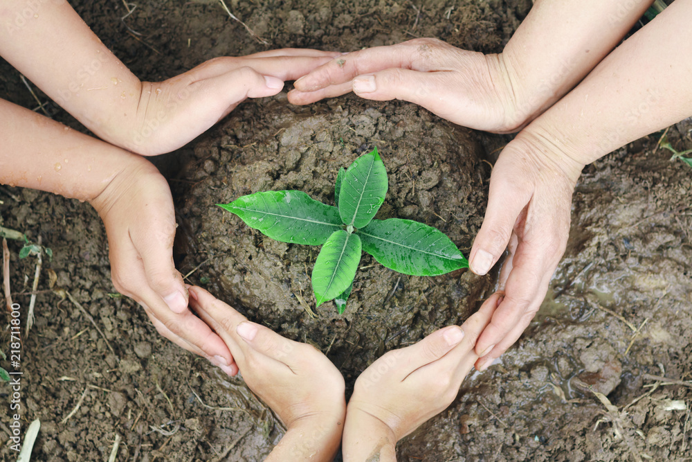 Fototapety, obrazy: Plant surrounded by hands, nurturing and watering young baby plants growing in germination sequence on fertile soil