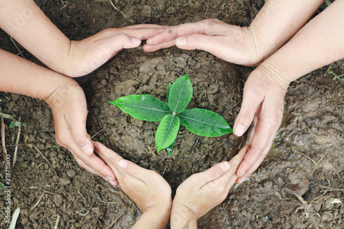 Fotografie, Obraz  Plant surrounded by hands, nurturing and watering young baby plants growing in g