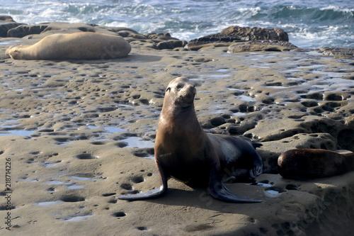 Photo  La Jolla Seals
