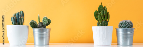 Keuken foto achterwand Cactus Collection of various cactus plants in different pots. Potted cactus house plants on white shelf against pastel pastel yellow wall. Cactus web banner.