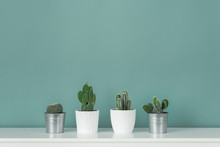 Modern Room Decoration. Collection Of Various Potted Cactus House Plants On White Shelf Against Pastel Turquoise Colored Wall. Cactus Plants Background.