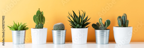 Modern room decoration. Collection of various potted cactus and succulent plants on white shelf against warm yellow colored wall. House plants banner.