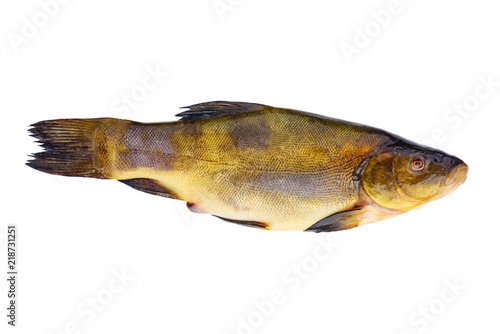 Fototapeta Fresh tench fish