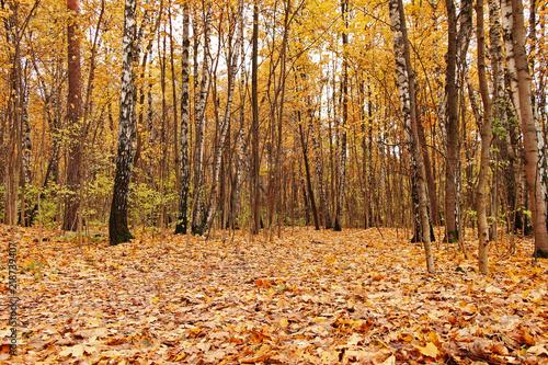pieknej-jesieni-zloty-las