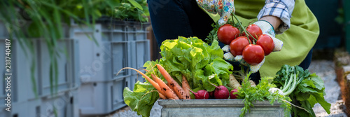 Unrecognisable female farmer holding crate full of freshly picked vegetables in her garden. Homegrown bio produce concept. Sustainable farm concept banner.