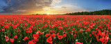 Landscape with nice sunset over poppy field - panorama - 218744253