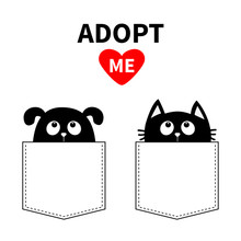 Adopt Me. Dont Buy. Dog Cat In...
