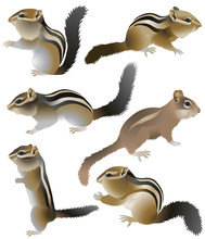 Collection Of Chipmunks In Col...