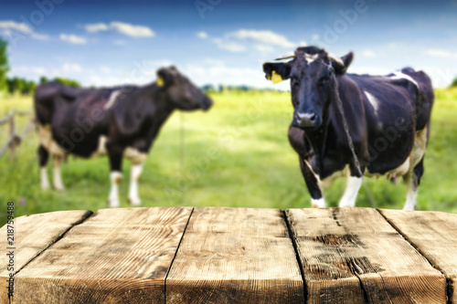 Desk of free space and rural landscape with cows.