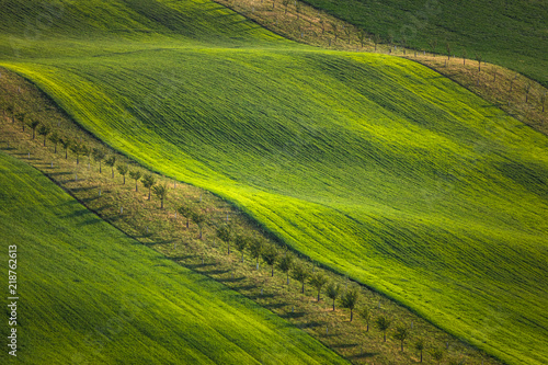 Moravian fields in spring
