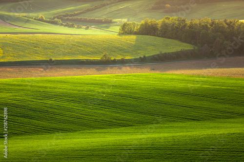 Foto op Canvas Pistache Moravian fields in spring