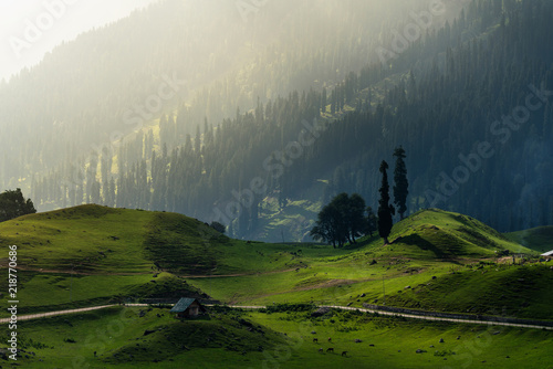 Beautiful farmland landscape with pine forest mountain in the morning in rural area Sonamarg, Jammu and Kashmir, India