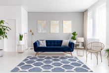 Real Photo Of Bright Living Room Interior With Royal Blue Couch, Three Simple Paintings, Window With Curtains And Fresh Plants
