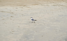 Seagull Sitting On The Sand At...