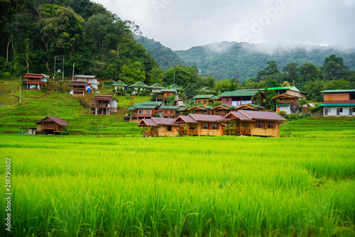 In de dag Lime groen Resort and beautiful scenery, homestay accommodation for tourists wooden house in Chiang Mai Province, Thailand. Baan Mae Klang Luang (Doi Inthanon)