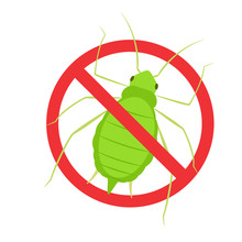 Aphid Vector Icon