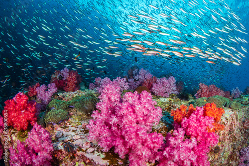 Valokuva Huge numbers of colorful tropical fish swimming around a beautiful coral reef