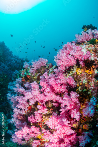 Fototapety, obrazy: A beautiful, colorful, healthy tropical coral reef system in Asia
