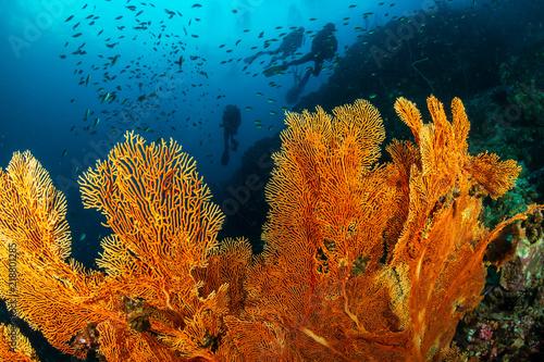 Fototapeta SCUBA divers exploring a colorful, beautiful tropical coral reef system obraz