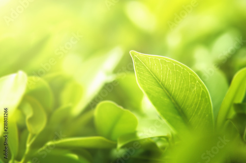 Spoed Foto op Canvas Natuur select focus green leaf on blur background and sunshine